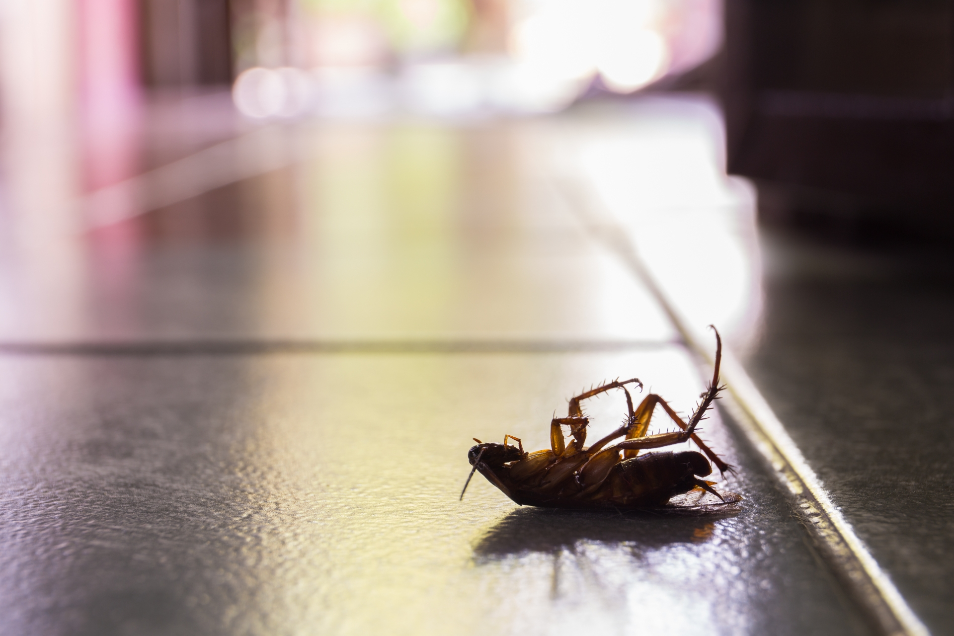 Cockroach Control, Pest Control in South Kensington, SW7. Call Now 020 8166 9746